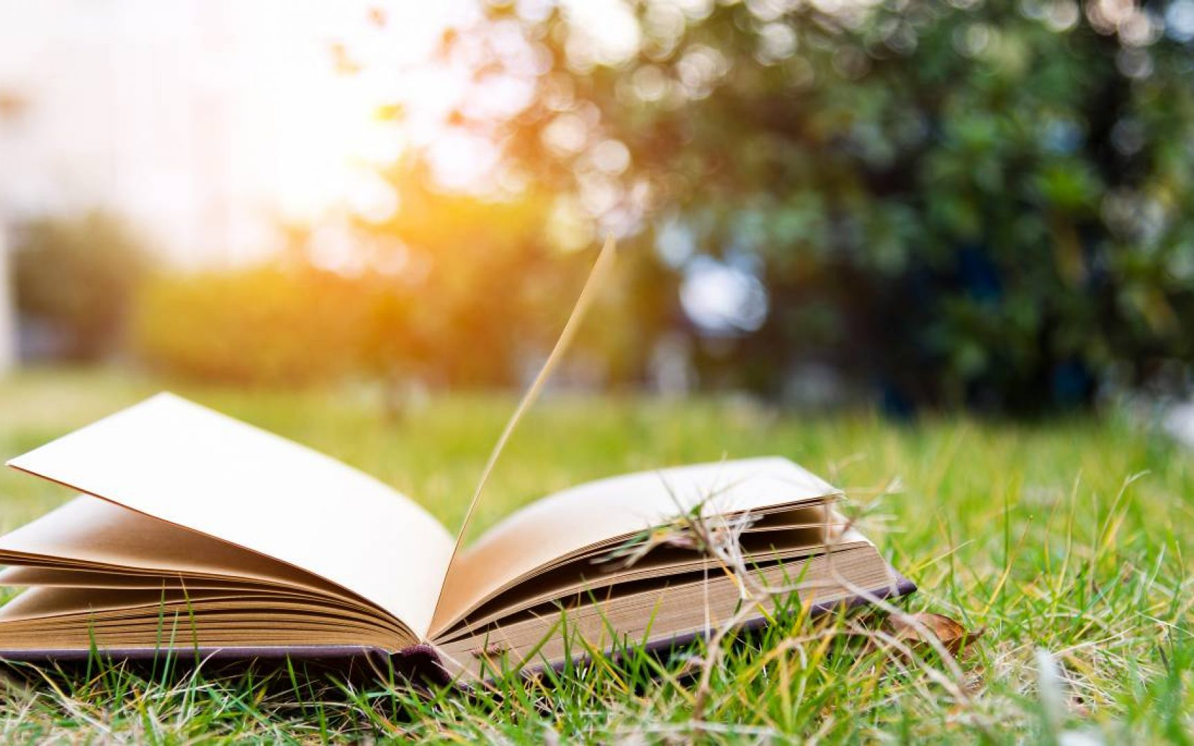 An open book with pages turning laying on the grass with the sun setting in the background