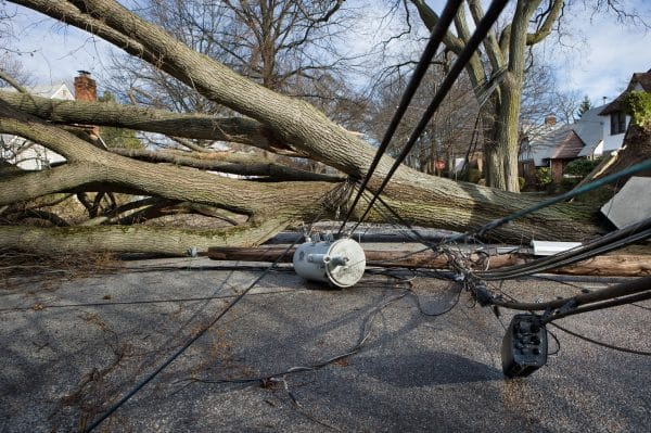 A fallen tree on top of downed power lines