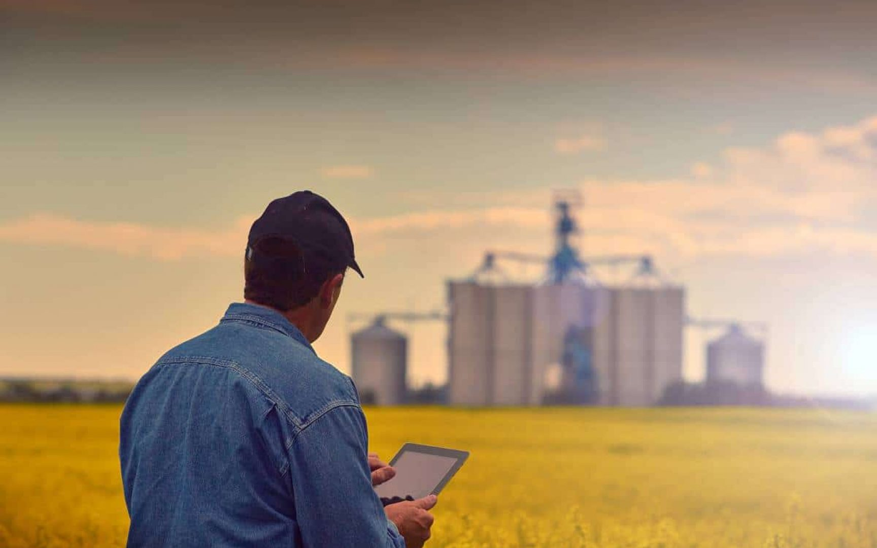 Farmer in wheat field uses a tablet device.