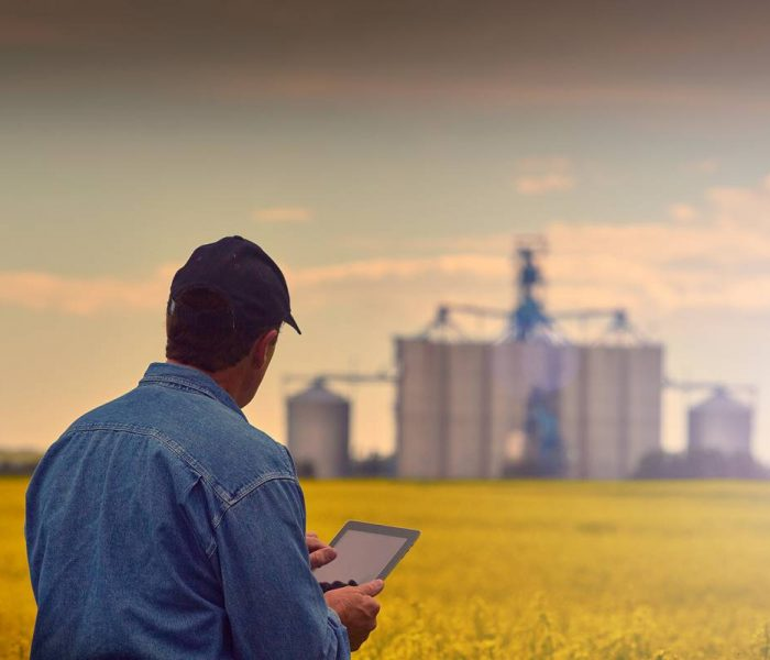 Farmer in wheat field uses a tablet device.