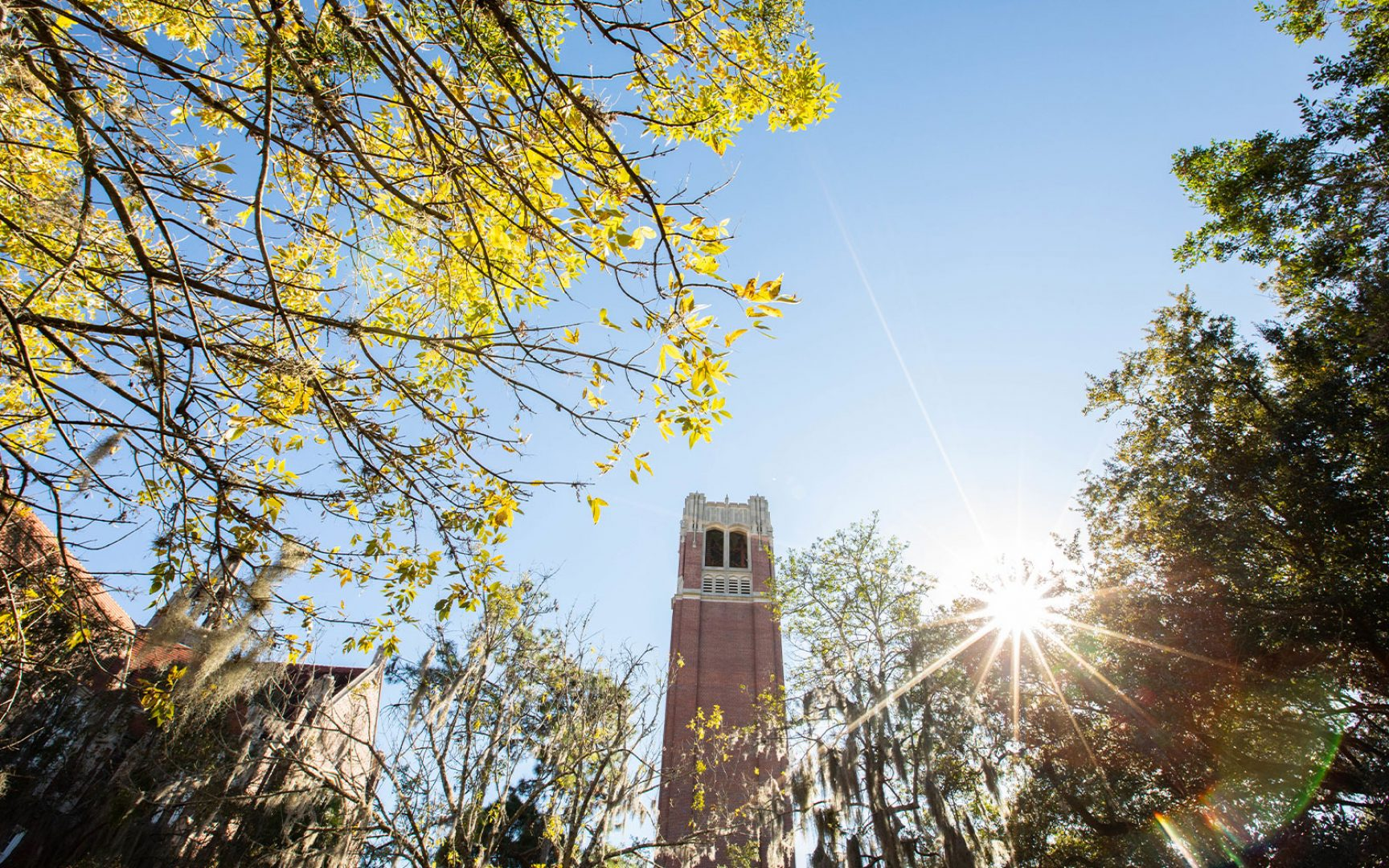 Upshot of a tall brick tower through the tree branches and sun shining down