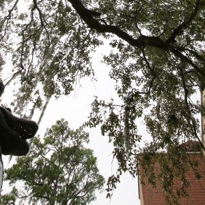 View looking up with the Gator Ubiquity Statue in the bottom left corner and tree branches in the frame and a brick building to the right.